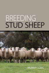 Breeding Stud Sheep by Murray Long