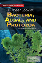 A Closer Look at Bacteria, Algae, and Protozoa by Britannica Educational Publishing;  Sherman Hollar