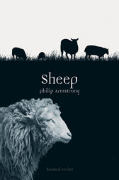Sheep by Philip Armstrong