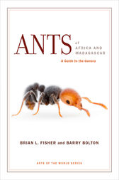 Ants of Africa and Madagascar: A Guide to the Genera
